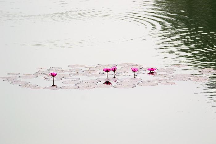 Ayurveda_Lotusweb